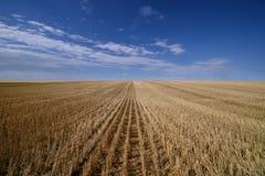 Skördade prärier för kanadensare för kornfält royaltyfria foton