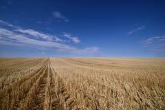 Skördade prärier för kanadensare för kornfält arkivbild