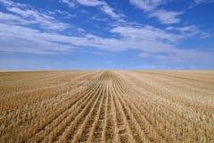 Skördade prärier för kanadensare för kornfält royaltyfria bilder