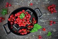 Skördade röda vinbär i en svart bunke Arkivfoto