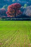 Skördar i Provence, Frankrike arkivfoton