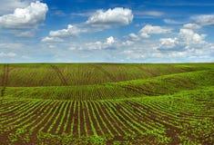 Skördar sätter in, det jordbruks- kullelandskapet med härlig himmel Royaltyfri Foto