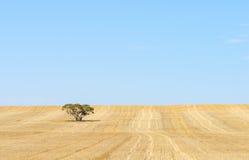 Skördat fält, blå himmel, bakgrund arkivbild