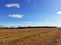 Skördat fält efter kornskördar Fotografering för Bildbyråer