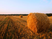 Skördat fält med Straw Rolls på soluppgång Royaltyfri Fotografi