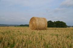 Skördat fält med sugrörbaler i sommar Arkivfoton