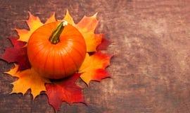 Skördbakgrund med pumpor Orange halloween pumpor på Royaltyfri Fotografi