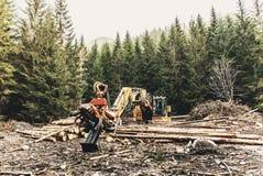 Skördearbetare för snickerimaskintraktor i det primära trät för skog som bearbetar som beskär filialer deforestation arkivfoton