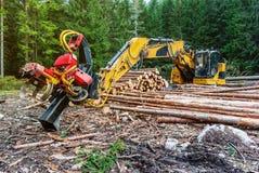 Skördearbetare för snickerimaskintraktor i det primära trät för skog som bearbetar som beskär filialer deforestation arkivbilder