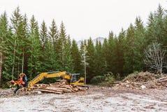 Skördearbetare för snickerimaskintraktor i det primära trät för skog som bearbetar som beskär filialer deforestation arkivfoto