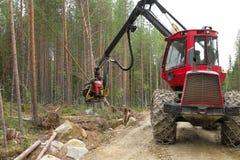 Skördearbetaremaskinen som arbetar i en skog som hugger av ett ungt, sörjer trädet Wood bransch royaltyfri fotografi