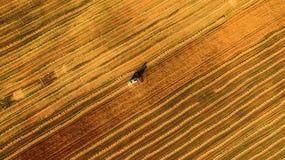 Skördearbetaren som arbetar i fält och, mejar vete ukraine flyg- sikt arkivfoto