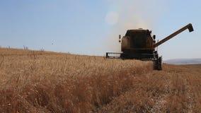 Skördearbetaresammanslutningen besegrar vetefältet lager videofilmer