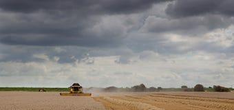 Skördetröska på arbete under en tung himmel Arkivfoto