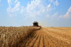 Skördetröska som arbetar på ett guld- moget vetefält Främre sikt, blå himmel med moln i bakgrunden arkivbilder