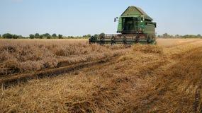 Skördetröska som arbetar på ett vetefält under skörd Arkivbild