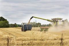 Skördetröska som lastar av korn in i en släp arkivfoto