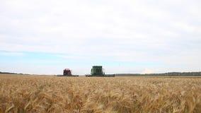 Skördetröska två på kornfältet stock video