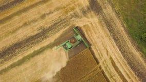 Skördetröskan för den bästa sikten samlar vetet på solnedgången Plockningkornfält, skördsäsong arkivfilmer