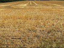 Skördfält i sommar med gummihjulspår Royaltyfri Fotografi