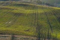 Skördfält på en solig afton i litauiskt arkivfoton