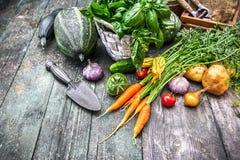 Skördgrönsaker med örter och kryddor royaltyfria foton