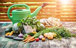 Skördgrönsaker med örter och kryddor royaltyfri foto