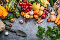 Skördgrönsaker med örtkökträdgården arkivbilder
