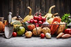 Skördgrönsaker med örtkökträdgården royaltyfri fotografi