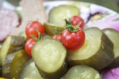 Skördmellanmål med nya grönsaker Royaltyfria Foton