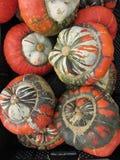 Skördsäsong och garnering med kalebassen Fotografering för Bildbyråer