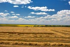 Skördtekniker harvester Jordbruksmark och att slutta fält på en ljus och solig dag i sommar royaltyfri bild