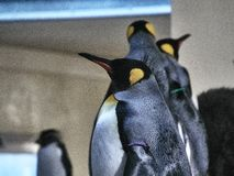 Sköt av en grupp av pingvin royaltyfri foto