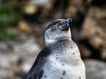 Sköt av en pingvin royaltyfri foto