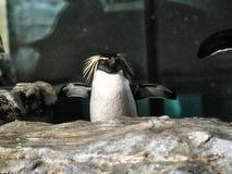 Sköt av en pingvin arkivbilder