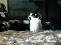 Sköt av en pingvin arkivfoton