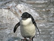 Sköt av en pingvin arkivbild
