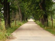 sköt den norr vägen för aarhus bygddenmark smuts trees Arkivbilder