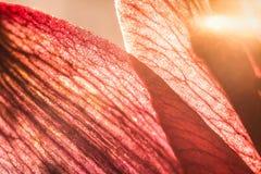 sköt stamens för blommafokus makro Naturbakgrundsfotografi Closeupfoto av det texturerade bladet arkivbild