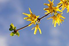 sköt täta blommor fattar yellow royaltyfri fotografi