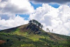 Skövlade skogar, endast några små träd på berget arkivfoto