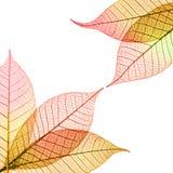 składów jesienni liść Obraz Royalty Free