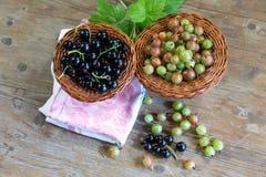 Skład świeże jagody czarny rodzynek agrest na drewnianych powierzchniach i, Fotografia Stock