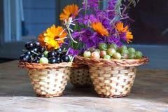 Skład świeże jagody czarny rodzynek agrest na drewnianych powierzchniach i, Zdjęcia Stock
