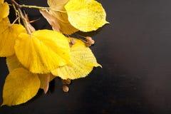 Skład żółci jesień liście na drewnianym tle Jesień liście na tle heban fotografia stock
