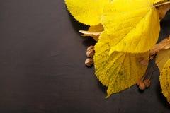 Skład żółci jesień liście na drewnianym tle Jesień liście na tle heban obraz royalty free