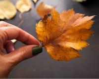 Skład żółci jesień liście na drewnianym tle Jesień liście na tle heban fotografia royalty free