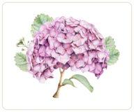 Skład różni wiosna kwiaty, rośliny i Zdjęcia Royalty Free