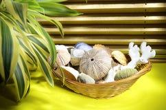 Skład seashells Zdjęcie Stock
