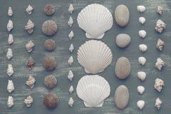 Skład set skorupa kamieni otoczaków jeża tła kopii gwiazdowe drewniane stare szarość będąca ubranym przestrzeń Obrazy Stock
